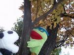 木登りカッパ