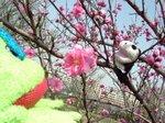 桜になりきりパンダ